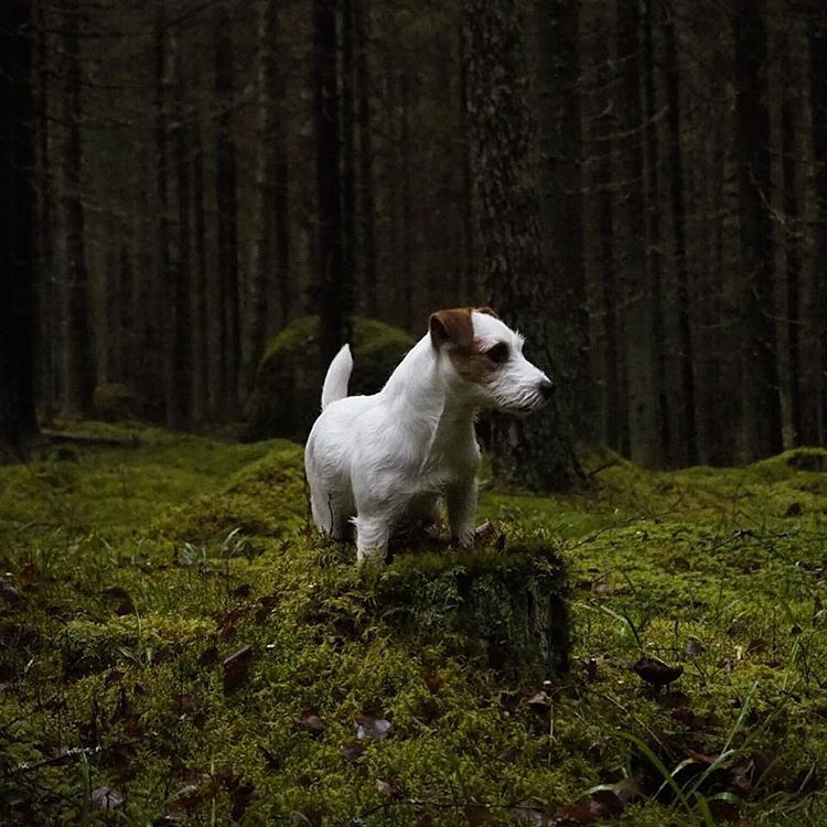 Hello Instagram! Todays WeeklyFluff takes us to the frigid forestshellip